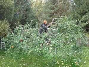 Elina omenapuussa